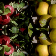 Just how important are apples? If you are a farmer in the Hudson Valley, New York, apples just might be your livelihood. Spearheaded by Colette Rossant and the Windfall Project,...
