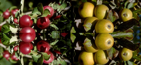 Glynwood: Apple Exchange between New York and Le Perche