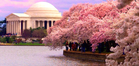 National Gallery of Art: Cherry Blossom Fesitval