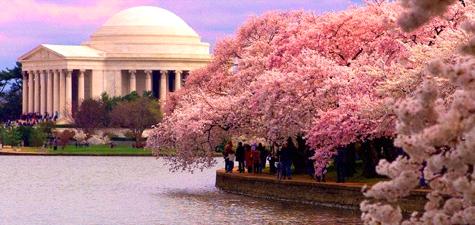 National Gallery of Art: Cherry Blossom Fesitval
